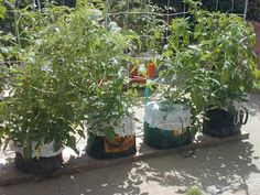 Global Buckets: Grow Bags