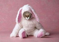 Poor thing - who did this - Pink bunny Cat