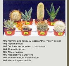 Types of Cactus House Plants Cactus House Plants, Cactus Terrarium, Indoor Cactus, Rock Garden Plants, Garden Cactus, Succulent Names, Cacti And Succulents, Planting Succulents, Cactus Plante