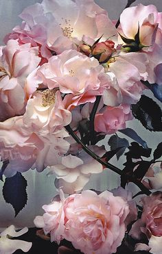 NICK KNIGHT INSPIRATION: FLORA | THE ROSY LION
