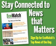 Eco Watch is following Wildlife Earth! They make our world a better place everyday! Stay connected by signing up for EcoWatch's Top News of the Day!