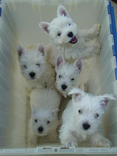 Puppies<3