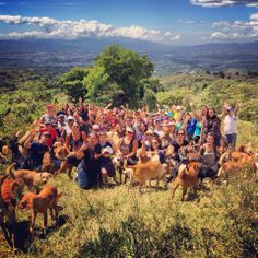 I just love the pictures posted by the rescue - Territorio de Zaguates in Costa Rica.  The dogs (and some cats and other creatures) are so happy and loved...And what a beautiful place!  Hermoso grupo el q nos acompañó hoy a Territorio! GRACIAS!!!