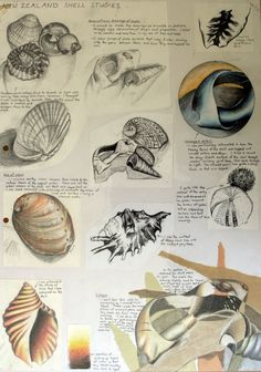 A collection of free art resources for teachers provided by the Student Art Guide. Posters and classroom handouts to make the busy teacher's job easier! Sketchbook Layout, Textiles Sketchbook, Gcse Art Sketchbook, Sketchbook Inspiration, Sketchbook Ideas, Sketching, Shell Drawing, Kunst Portfolio, Observational Drawing