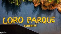 Octavian Serban: Loro Park...Part 1... Tenerife, Company Logo, Park, Parks, Viajes, Teneriffe