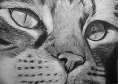 Original Pencil Drawing - Cat Eyes - 5x7 Pencil Portrait