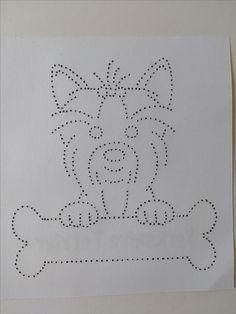 yorkshire terrier / hond
