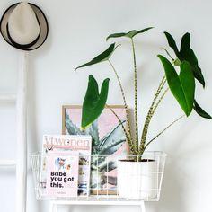 Karwei plantenbak