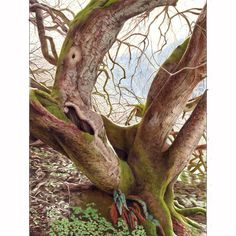 Landscape Framed Print featuring the drawing Tree Of Character by Denise Howard Prismacolor, Pencil Drawings, Art Drawings, Pastel Crayons, Polychromos, Coloured Pencils, Coastal Art, Color Pencil Art, Character Drawing
