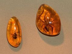 This color was named for the gemstone that forms after tree sap has hardened over many years. This color is a shade of Yellow, Brown The color Amber is named after a Gem Dinosaur Tails, Baltic Amber Teething Necklace, Science Illustration, Blue Amber, Shades Of Yellow, Time Capsule, Color Names, Bird Feathers