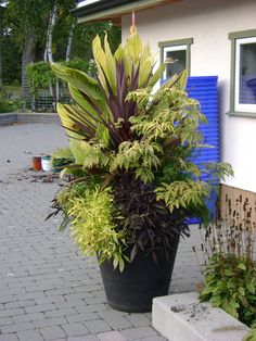 Urban Gardening This is made up of two sections, one featuring evergreens and small trees and shrubs suitable for a small urban garden and Container Flowers, Container Plants, Container Gardening, Urban Gardening, Garden Shrubs, Lawn And Garden, Outdoor Planters, Garden Planters, Christmas Urns
