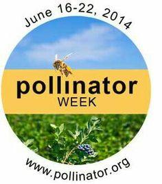 #pollinator week #bees