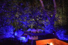 Bliss Lights blue lights