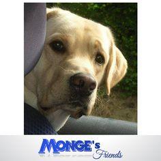 #Mongesfriends