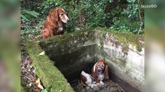 When a dog gets trapped in a cistern, her best friend stands watch over her for a week until she's rescued. Jen Markham (@jenmarkham) has the story.