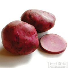 Mountain Rose Potatoes:  Early-season 70-90 days. Gorgeous, rosy-skinned and fleshed tubers, these versatile, all-purpose spuds are deliciously moist but not waxy textured. Mountain Rose is extra nutritious and high in antioxidants. Excellent baked, mashed or fried. Semi-erect plants are disease resistant and highly productive.
