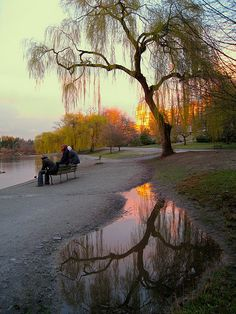 Reflections Under Weeping Willow | Flickr - Photo Sharing!