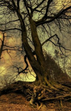 sweetlysurreal:  The fairy tree - HDR Photo