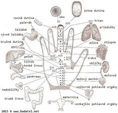 Acupuncture points or acupressure points connect meridians to specific internal organs. Acupuncture points are stimulated to treat deseases. Acupuncture For Weight Loss, Acupuncture Points, Acupressure Points, Ayurveda, Hand Reflexology, Reflexology Points, Acupuncture Benefits, Les Chakras, Mudras