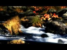 A gentle stream flows between rocks and autumn plants (Loop).     Purchase this clip from A Luna Blue:   http://www.alunablue.com/nature-stock-footage/nature/nature-01/clip-10.html     Nature Stock Video from A Luna Blue.   Imagery for Your Imagination.   http://www.alunablue.com