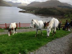 Lunch time at Killary Shellfish Farm with Connemara Equestrian Escapes Connemara, Riding Holiday, Ireland Holiday, Chincoteague Ponies, Irish Men, 12th Century, My Heritage, Horse Riding, Horseback Riding