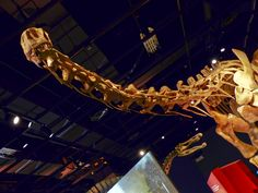 Ultimate Dinosaurs exhibit, Science Museum of Natural History, St. Paul, MN. © Mark Ryan
