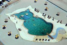 cat shaped pool