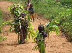 Niños en las plantac