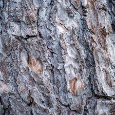 Tree Bark texture by Petras Paulauskas Tree Trunk Wallpaper, Wood Wallpaper, Display Advertising, Print Advertising, Skin Structure, Texture Images, Tree Bark, Print Pictures, Wall Art Prints