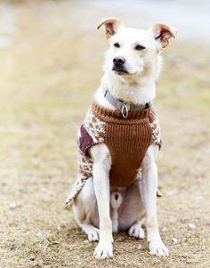 Tierfotografie: Aufnahme des Mischlingshundes Moritz in der Dog Station in Rauris