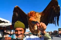Djemaa el Fna, Marrakesh: A Sensual Attack #vultures #birds #morocco #marrakesh