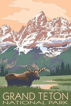 Grand Teton National Park - Moose & Mountains - Lantern Press Poster