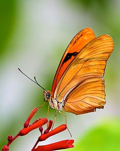 Beautiful Butterfly by Cecil Ramsey