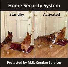 Corgi Alert System! No batteries, or electricity, required!