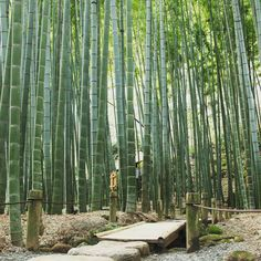 To see a beautiful bamboo grove without too many people : go to Hokokuji temple (Kamakura) !  Pour voir une belle bambouseraie sans trop de monde direction le temple Hokokuji à Kamakura !  #kamakura #bamboo #bambooforest #bamboogrove #greenworld #tokyodaytrip #peaceful  #japan #japon #travel #visitjapanfr #japanlover #japan_of_insta #japanphoto #japanfocus #japantrip #japangram #explorejapan #eos70d #japankudasai