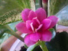 Beauty Blooms Bloom, Health, Garden, Plants, Garten, Health Care, Gardening, Plant, Outdoor