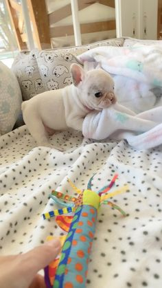 Baby Animals Super Cute, Cute Baby Dogs, Cute Little Puppies, Cute Dogs And Puppies, Cute Little Animals, Cute Funny Animals, Cute Babies, Baby Animals Pictures, Animals And Pets