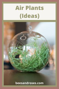 Air plants are easy to grow and keep alive, but because they are unique, we wanted to share a few ideas with you. Keep reading to learn more about air plants and how you should display them etc. #houseplants #easytogrowhouseplants #beesandrosesblog Indoor Gardening, Indoor Plants, Gardening Tips, Living Room Plants, House Plants, Easy To Grow Houseplants, Air Plants Care, Plant Labels, Plant Guide