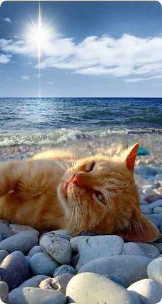 cool-ginger-kitty-cat-lying-on-beach-r-mobile.jpg (321×600)