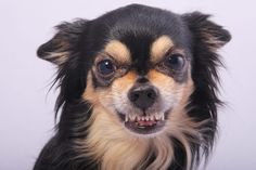 7 Tips for staying safe around dogs: Pet Problems Solved