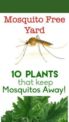 Garden Pests, Garden Bugs, Garden Care, Garden Yard Ideas, Lawn And Garden, Growing Vegetables, Growing Plants, Insect Repellent Plants, Plants That Repel Bugs