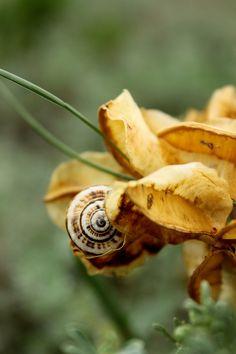 *Snail