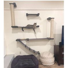 Temple - Donna Gordon - Temple added a photo of their purchase - Cat Wall Furniture, Modern Cat Furniture, Mod Furniture, Bamboo Furniture, How To Clean Furniture, Sisal, Diy Cat Tower, Space Fabric, Bed Shelves