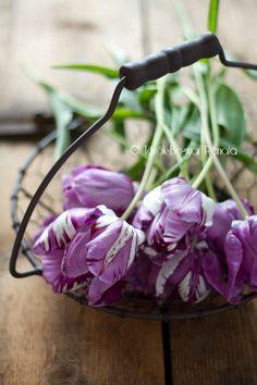 Purple tulips, so refreshing!