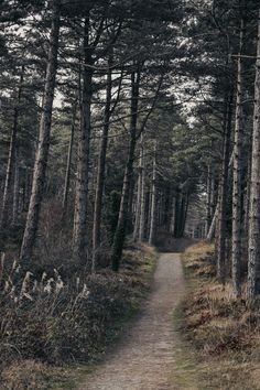 Anglesey, Photography Aesthetic, Photo Style, Insta Like, Vsco, Country Roads, Ootd, Facebook, Twitter