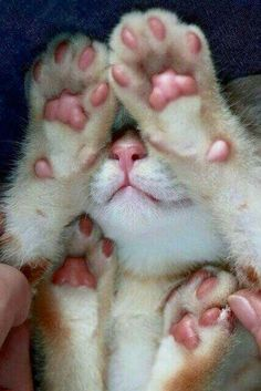 Jelly beans paws!!
