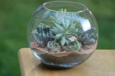 How to make your own succulent terrarium centerpieces | Offbeat Bride