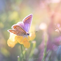 Butterfly in dreamy pastel and rainbow colours   Copyright Lizemijn Libgott  https://instagram.com/lizemijn