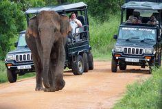 Elephant with Safari cars Udawalwe National Park Beautiful Birds, Animals Beautiful, Wild Elephant, Jungle Cat, Photo Diary, African Safari, Bird Species, Sri Lanka, Habitats