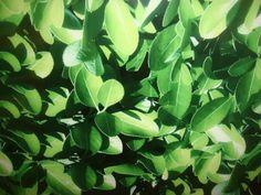lush green leaves poto